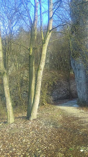 zimowe drzewoSC_0162